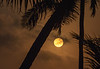 Rising Full Moon Flanked by Palm Trees, 6:37pm, Feb 18 2019