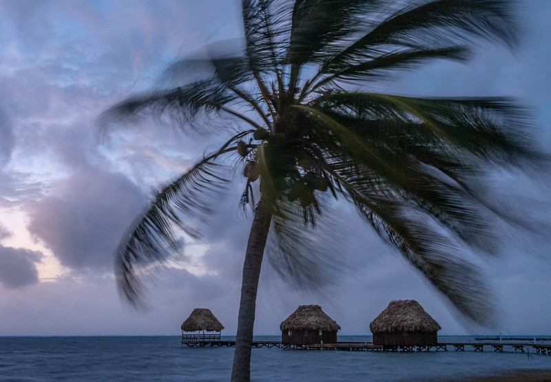 Swaying Palm Tree and Three Grass Huts Before Dawn, 5:54am