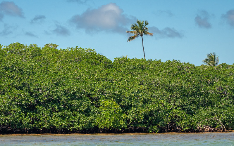 Mangroves and Palms