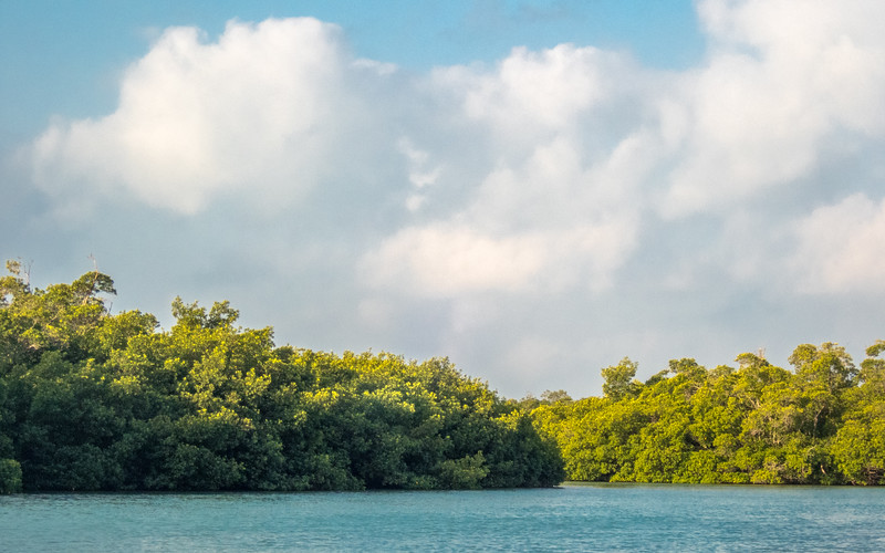 Mangroves and Clouds