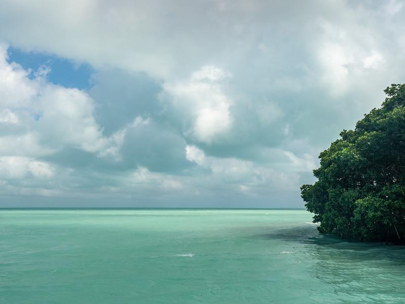 Edge of Mangrove Island, Clouds, and Dappled Light