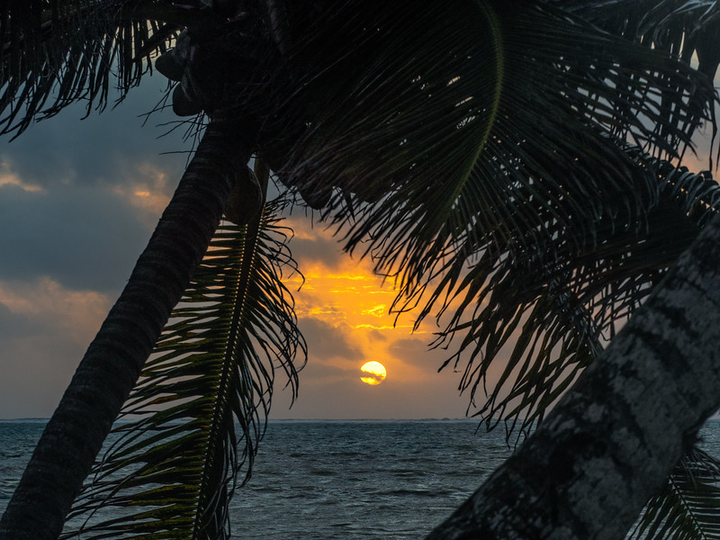 Rising Sun Framed by Palm Trees