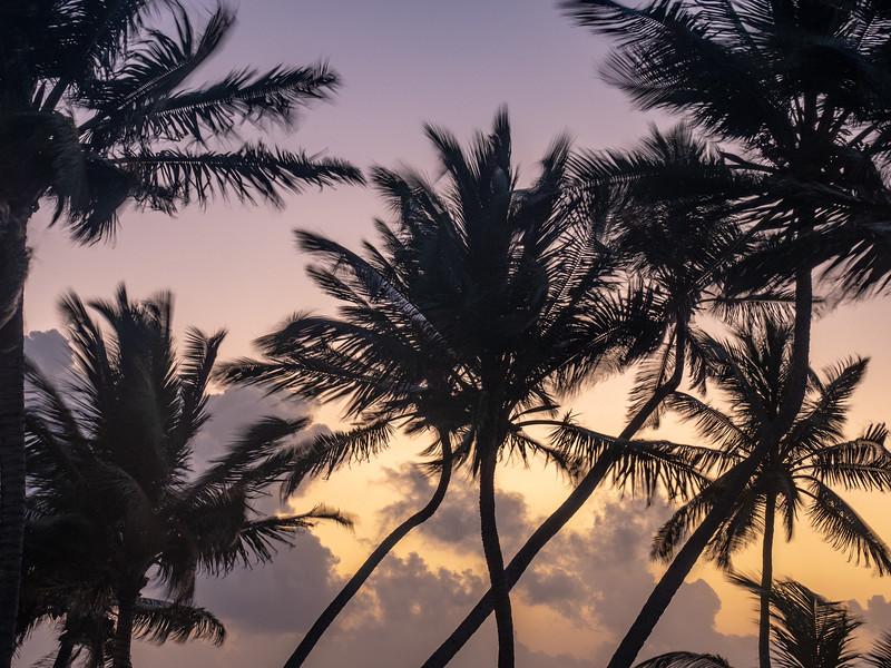 Pre-Dawn Dance of the Palm Trees, 5:56am, Feb 21 2019