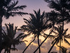 Pre-Dawn Dance of the Palm Trees, 5:56am, Feb 21 2019