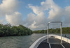 Looking for Fish in the Mangrove Channels