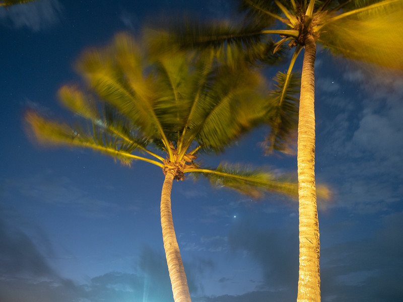 Palm Trees Swaying in the Pre-Dawn Wind, 5:29am