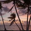 Palm Trees at Sunrise, Punta Allen MX