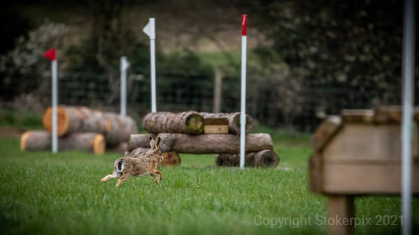 CXC Image Gallery - Hare!