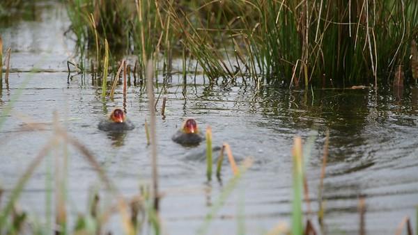 Taken at RSPB Otmoor Reserve