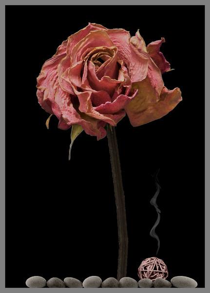 The Magic Rose Tree