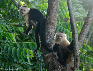 Capuchin Brothers