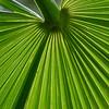 Underside of Palm Leaf