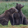 Young Bear Love #2