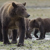 Mom and 2 cubs