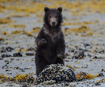 Cub at Attention