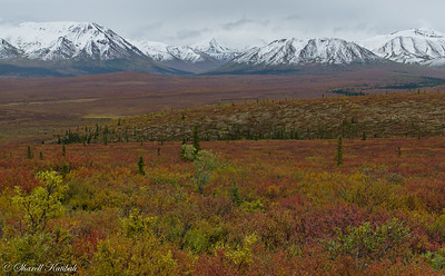 Fall Colors on Tundra, Denali NP
