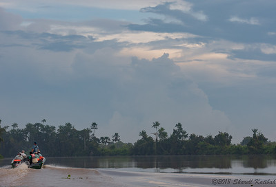 River Travel, Kinabatangan