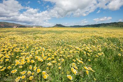 Field of Tidytips