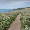 Tomales Point Trail, Spring