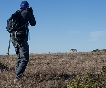 Rob Photographing coyote