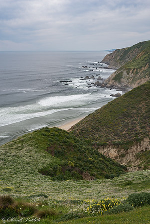 Looking North, Tomales Point Trail