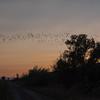 Bats Over Causeway