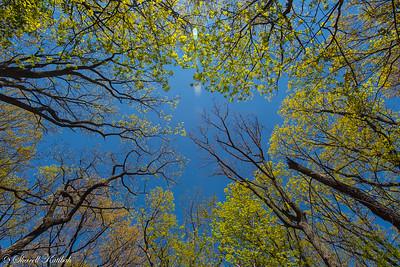 Looking Skyward, Appalachian Trail