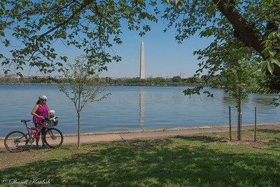 Cyclist and Washington Monument, Tidal Basin