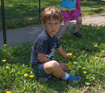 Serious Boy Picking Daisies