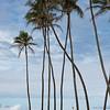 Palm Trees, H.A. Baldwin Beach Park