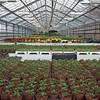 Icelandic Greenhouse