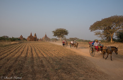 Carriage Rides Through Bagan