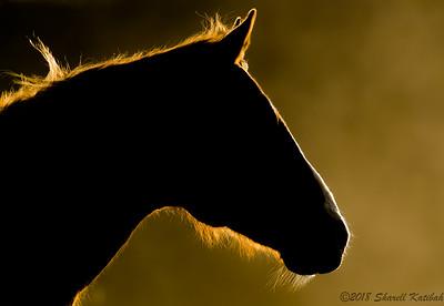 Horse in Golden Light