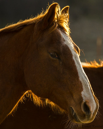 Horses, Late Afternoon