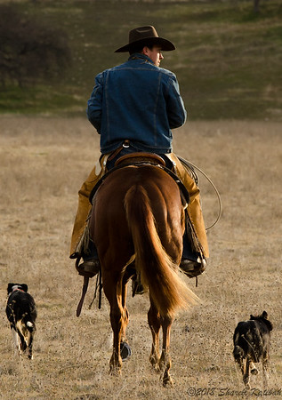 Riding Off from the Roping