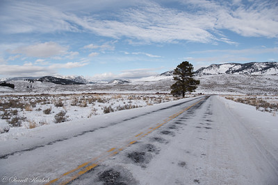 Road to Lamar Valley, Winter