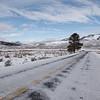 Road to Lamar Valley, Winter