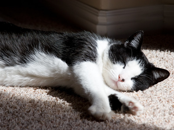"""""""Bliss"""" Cats have such difficult lives.  What it would be to fill your entire day with finding good patches of sun to sleep in with the occasional meal on demand.  The life."""