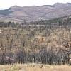 Fire burn regrowth. Sweetwater County, Wyoming