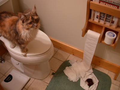 "Calliope. ""Unroll toilet paper. Done! What's next on my to-do list?"""