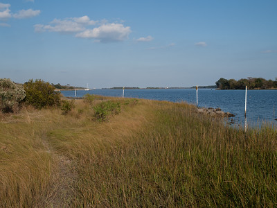 Marsh grasses. SW of pier.