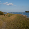 Marsh grasses. SW of pier.