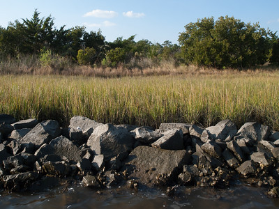 Rock sill in front of marsh grasses. SW of pier. Phase I, 2005.