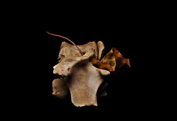 boned leaf. courtesy of @pmcpodcast, @janeespenson and @gocheeksgo episode