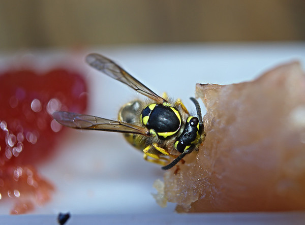 sushi wasp for @neilhimself (no bees :-( )