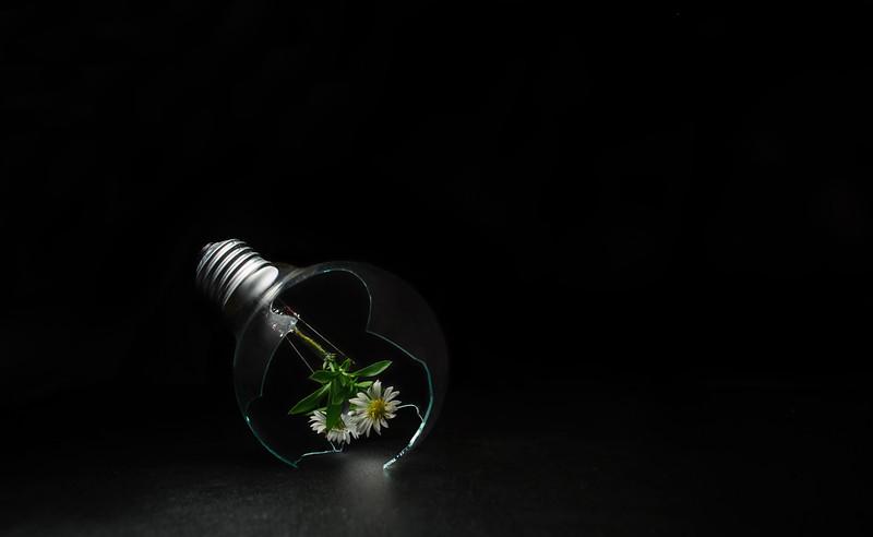alternative light II