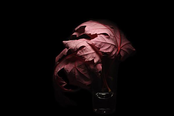 leaft vIII