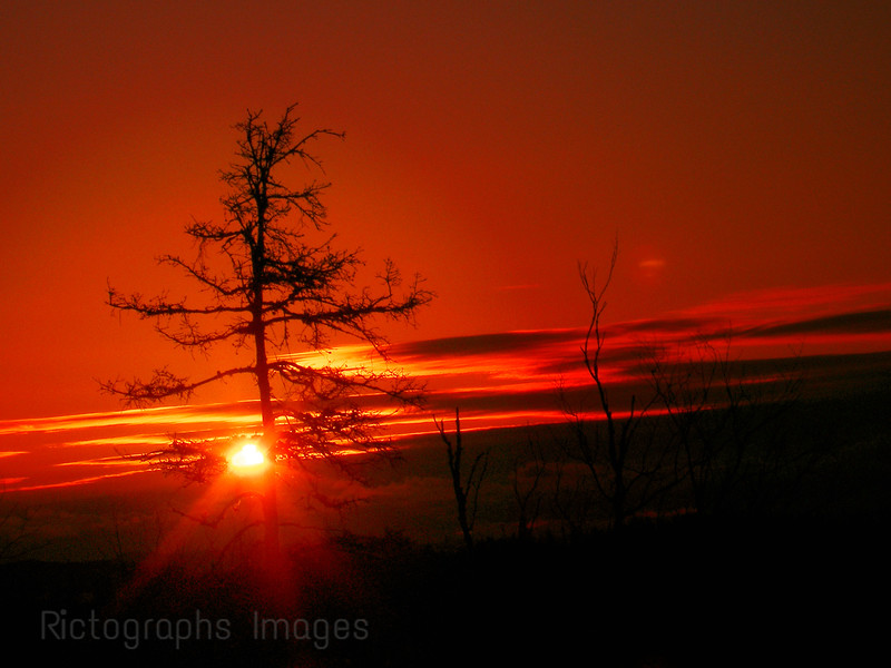 Sun Rise Lonely Tree