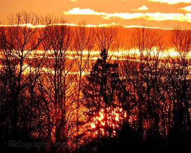 Trees, Sun Setting,