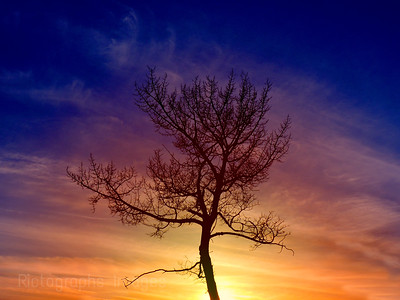 Lonely Tree,